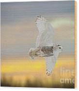 Snowy Owl Pictures 71 Wood Print