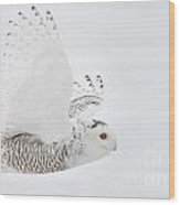 Snowy Owl Pictures 77 Wood Print