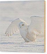 Snowy Owl- Ready For Takeoff Wood Print