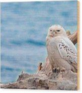 Snowy Owl Resting On Log Wood Print