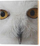 Snowy Owl Stare Wood Print