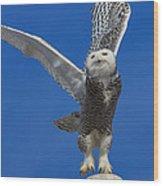 Snowy Owl Taking Flight Wood Print