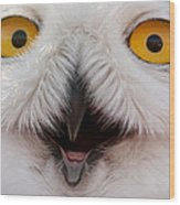 Snowy Owl Up Close And Personal Wood Print