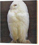 Snowy Owl Vintage  Wood Print