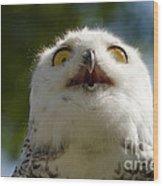 Snowy Owl With Big Eyes Wood Print