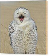 Snowy Owl Yawning Wood Print