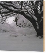 Snowy Path Wood Print by Amanda Moore