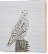 Snowy Perched Profile Wood Print