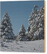 Snowy Pines Wood Print