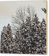 Snowy Pines Wood Print