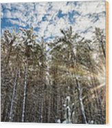 Snowy Pines With Sunflair Wood Print