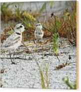 Snowy Plover And Chick Wood Print