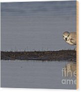 Snowy Plover On A Sandbar Wood Print