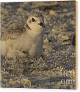 Snowy Plover Transforms Into A Spiderbird 2 Wood Print