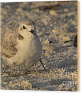 Snowy Plover Transforms Into A Spiderbird 3 Wood Print