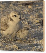 Snowy Plover Transforms Into A Spiderbird 4 Wood Print