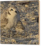 Snowy Plover Transforms Into A Spiderbird 5 Wood Print