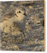 Snowy Plover Transforms Into A Spiderbird 6 Wood Print