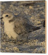 Snowy Plover Transforms Into A Spiderbird 8 Wood Print