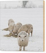 Snowy Sheep Wood Print