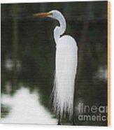 Snowy Showy Egret Wood Print