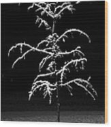 Snowy Sophistication - An Elegant Fledgling Wood Print