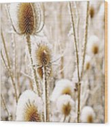 Snowy Thistle Wood Print by The Forests Edge Photography - Diane Sandoval