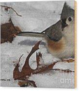 Snowy Titmouse Wood Print