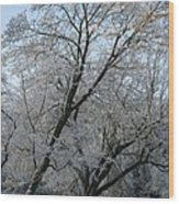Snowcovered Trees Wood Print
