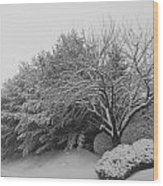 Snowy Trees In Black And White Wood Print