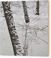 Snowy Trees In Frozen Pond - Winter Forest Wood Print by Matthias Hauser
