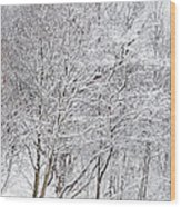 Snowy Trees In Winter Park Wood Print