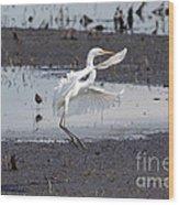 Snowy White Egret Wood Print