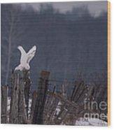 Snowy Wings Up Wood Print
