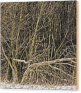 Snowy Winter Forest Wood Print