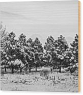 Snowy Winter Pine Trees In Black And White Wood Print