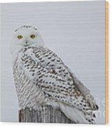 Snowy Wisdom Wood Print