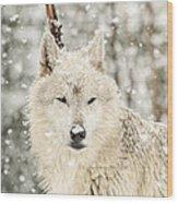Snowy Wolf Wood Print