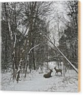 Snowy Wooded Path Wood Print