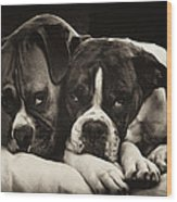 Snuggle Bug Boxer Dogs Wood Print by Stephanie McDowell