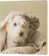 Snuggle Dog Wood Print