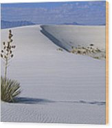 Soaptree Yucca At White Sands Nm Wood Print