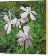 Soapwort Flowers Wood Print