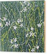 Soapwort Wood Print