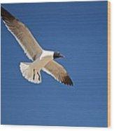 Soaring Above The Sea Wood Print
