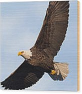 Soaring American Bald Eagle Wood Print
