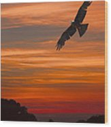 Soaring Bird Of Prey Wood Print