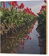 Soaring Crimson Tulips Wood Print