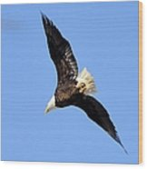 Soaring Eagle Wood Print