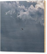 Soaring Gull - Bird Flying In A Cloudy Sky Wood Print